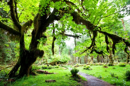 national forests: rain forest