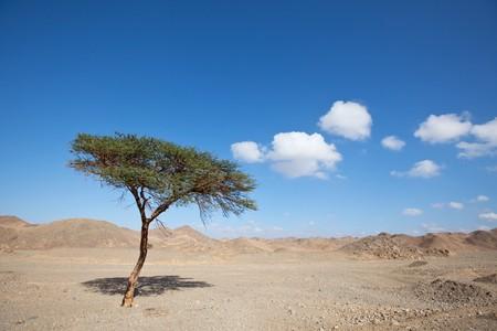 Egyptian landscapes Stock Photo - 7642449