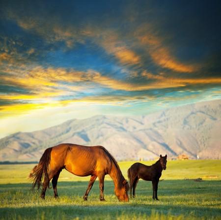 autumn horse: Horses