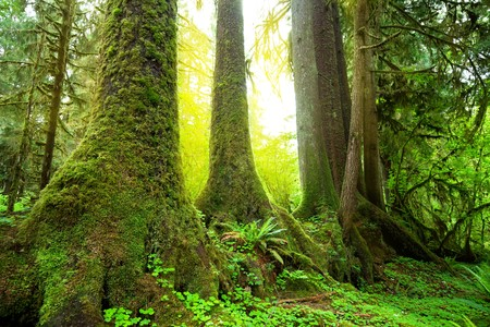 Sunny beams in forest photo