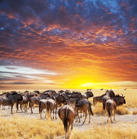 kenya: antelope gnu crowd