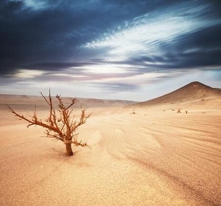 desierto: Desierto de Gobi Foto de archivo