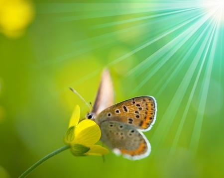 Papillon en fleur Banque d'images