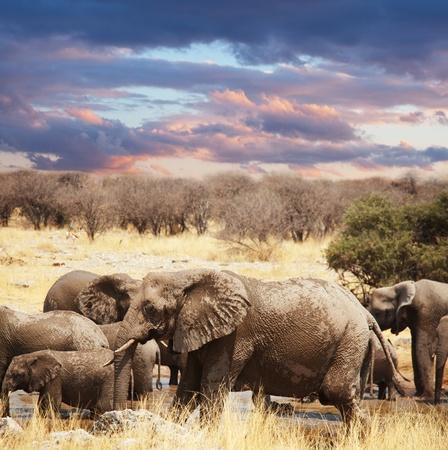 elefanten: Elephant Lizenzfreie Bilder