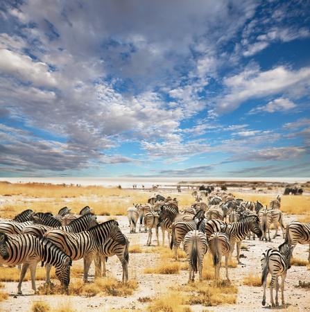 zebras on waterhole Imagens