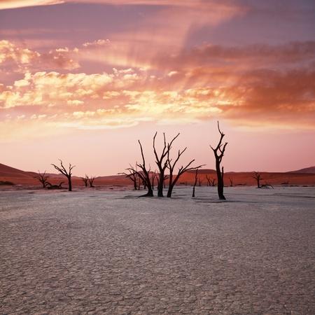 barren land: Dead valley in Namibia