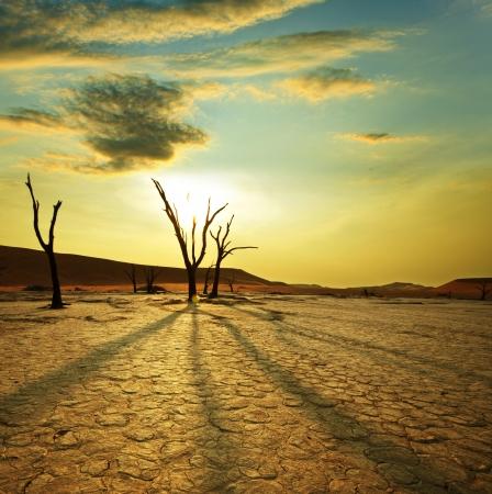 arboles secos: Valle muerto en Namibia Foto de archivo
