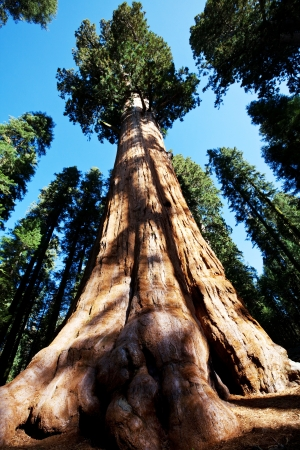 Sequoia National Park in USA Standard-Bild