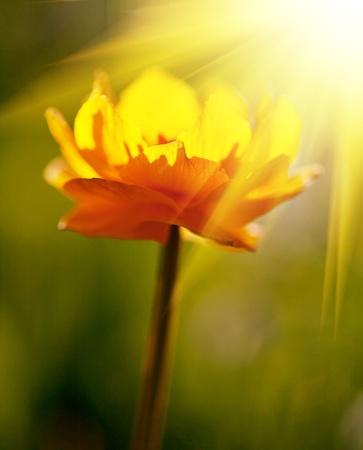 Flowers Stock Photo - 9146897