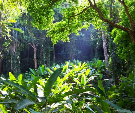 rain forest Stock Photo - 9147125