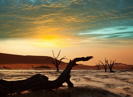 parch: Dead valley in Namibia