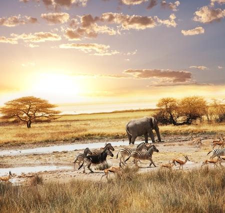 Safari Standard-Bild