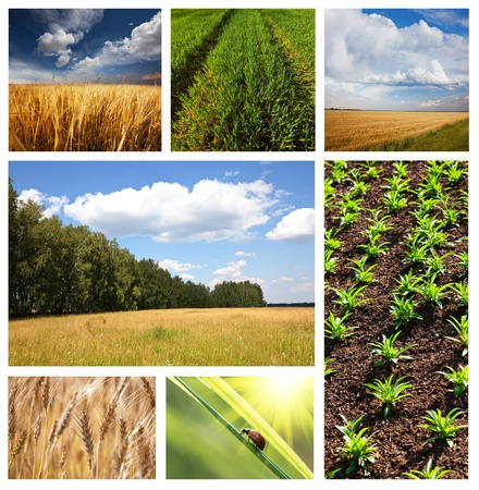 agriculture industry: fields collage Stock Photo