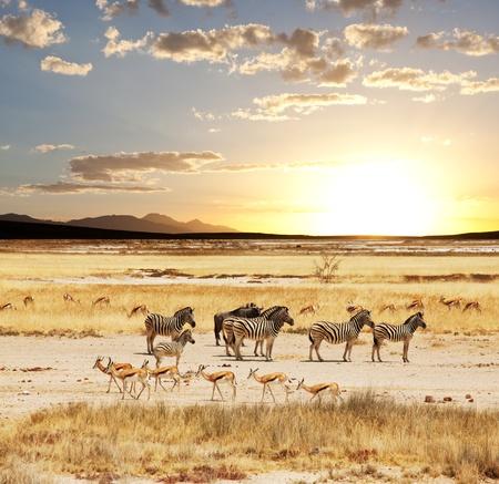 desert animal: Safari Foto de archivo