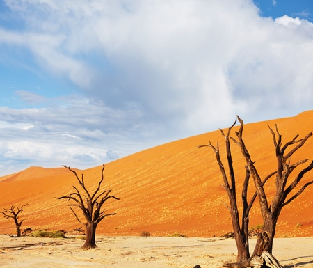 Dead valley in Namibia Stock Photo - 9248126
