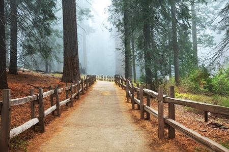 Sequoia National Park in USA Stock Photo - 9250692