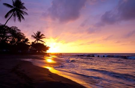 hawai: Playa tropical