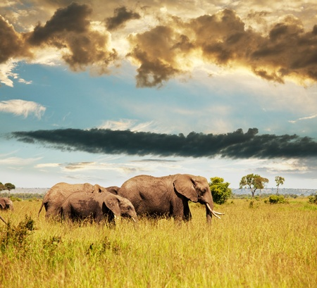 national forest: Elephant Stock Photo