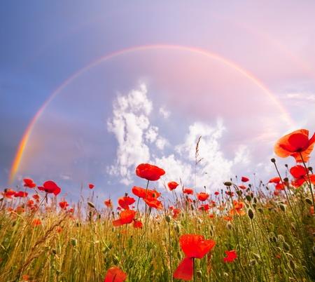 poppy and rainbow Stock Photo - 9795008