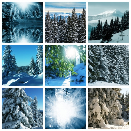 frozen trees: Winter collage