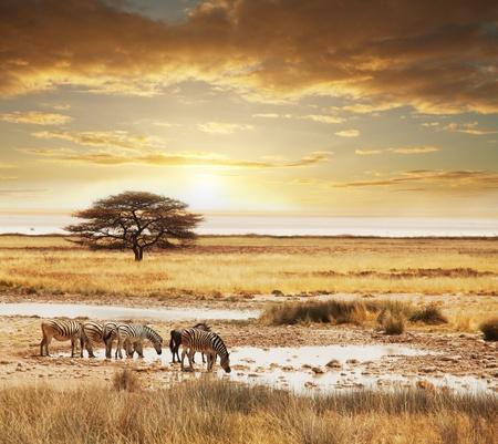 africa sunset: safari in Africa Archivio Fotografico