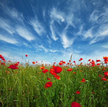 wildflowers: poppy and rainbow Stock Photo