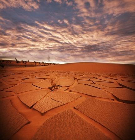 barren land: drought land