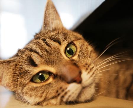 whiskar: Relaxing cat Stock Photo