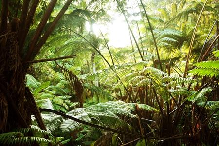 rain forest in Hawaii photo