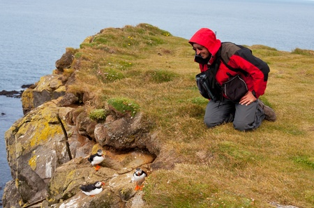 ledge: tourist watch for puffin