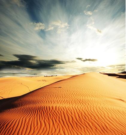 animales del desierto: Caravana en el desierto del Sahara