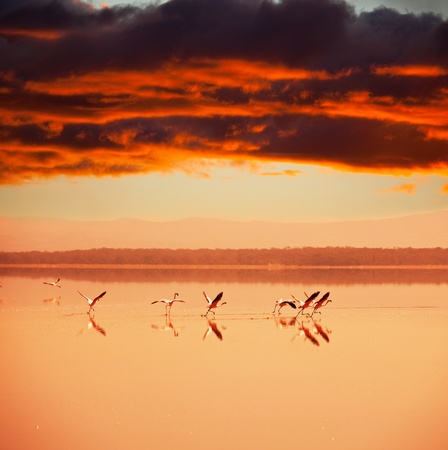 pink flamingo at sunrise photo
