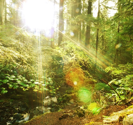 sunny  forest in Olympic Park,USA photo
