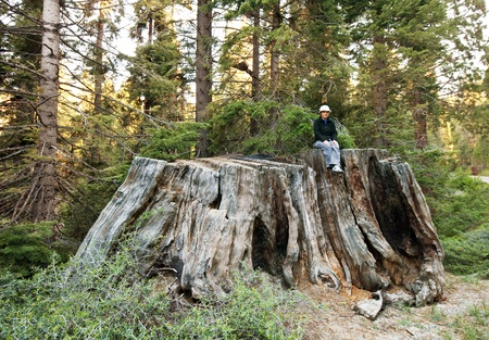girl on giant stump in Sequoia National Park in USA photo