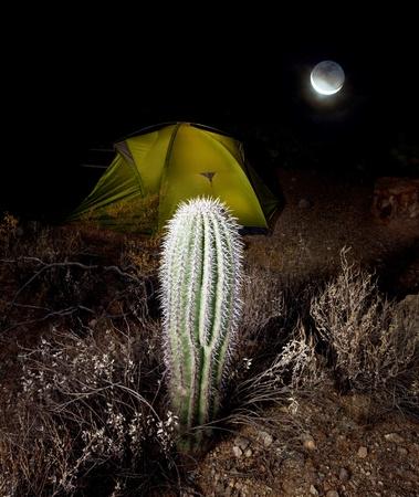 night scene in desert camping photo