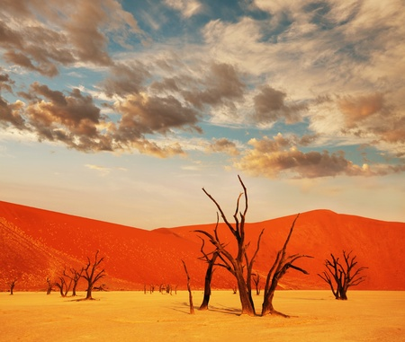 sossusvlei: Dead valley in Namibia