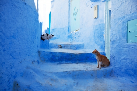 typical: Chefchaouen in Morocco