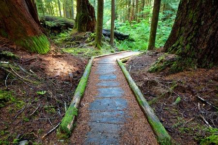 boardwalk in forest photo