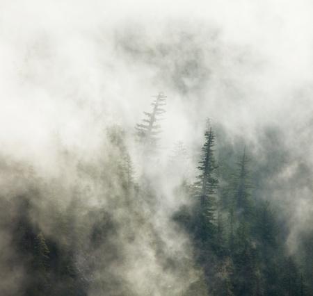 woodland  horror: Magic forest of misty Stock Photo