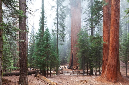 Sequoia National Park in USA photo