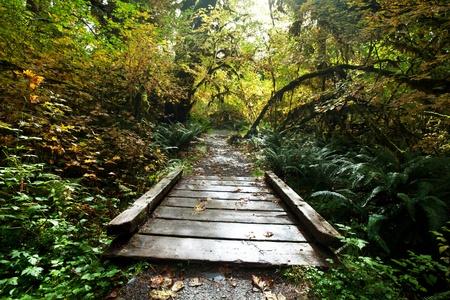 redwood: boardwalk in forest Stock Photo
