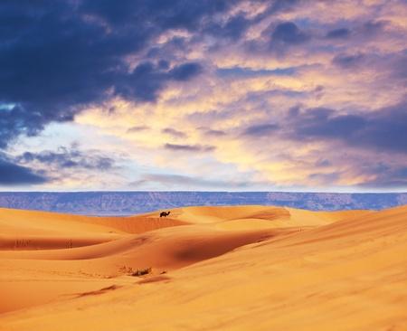 dryness: Sahara desert Stock Photo