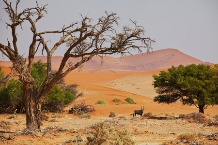sequias: Dead valle en Namibia