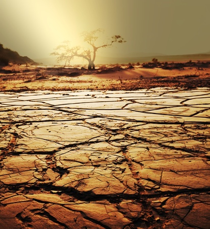 drought land Stock Photo - 12857173