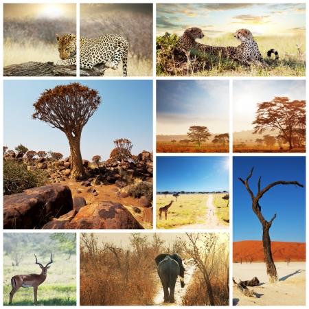animales safari: African Safari en Etosha, Namibia