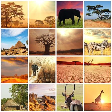 africa sunset: african safari in Etosha,Namibia