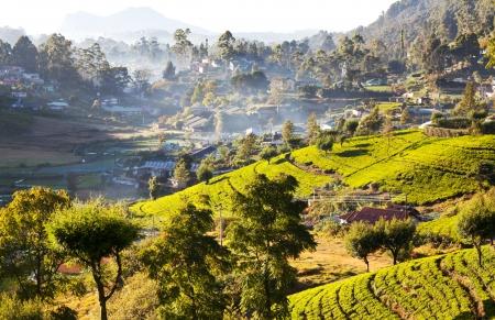agriculture sri lanka: Sri Lanka landscapes