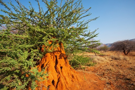 Termite construction in Namibia Stock Photo