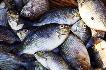 fish market Stock Photo - 13345469