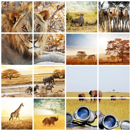 african safari in Etosha,Namibia Stock Photo - 13422671
